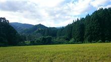 今朝の田舎