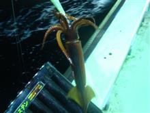 津軽海峡、スルメイカ釣り