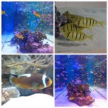 銀座で美ら海水族館