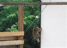 猿キタ━━━━(°Д°)━━━━!
