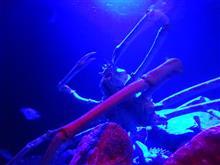 水族館と敬老の日