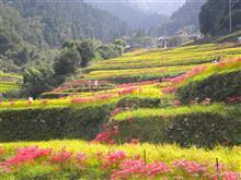 「彼岸花めぐり」福岡県うきは市浮羽町に行って来ました