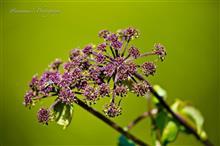 初秋の花 Part1