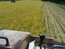 稲刈り6日目