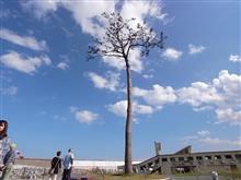 沿岸復興TRG