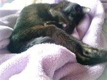 ネコは隣で寝てました