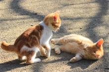 小猫から成猫に