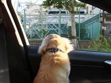 ハッピーと新横浜公園へ