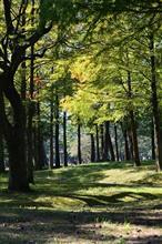 秋の気配をかんじてー別府公園ー