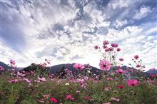 Cosmos with Sun