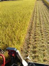 2015稲刈り。