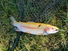 今年最後?の釣りに行ってきました。