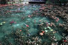 L'étang de Monet