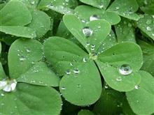 またまた雨の週末、おはようござりす。