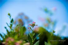秋の花を85Debu(+Leica Q)で ①