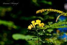 秋の花を85Debuで ②