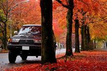 紅の絨毯  三色彩道