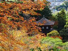 京都に紅葉を見に行こうよう