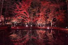 Mirrored Reds