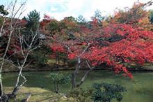今日は久しぶりの京都