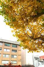 秋の飛騨へドライブ!【その1】飛騨牛たべるぞっの巻
