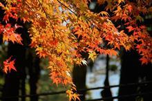 日本百名山 ~秋の筑波山 紅葉狩り~