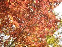 那須さんぽ③― 紅葉ギャラリー ―