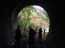 2015秋 愛岐トンネル群の紅葉