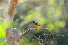 多磨霊園で鳥撮り散歩 ~~(m-_-)mウラメシヤァ