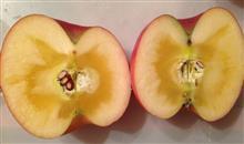 ポルシェりんご