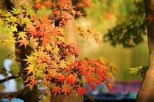 関東で一番遅い紅葉 ~亀山湖 紅葉クルーズ~