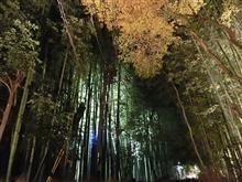 京都嵯峨嵐山の竹林の小道、渡月橋ライトアップ