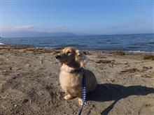 ハッピー、琵琶湖を見る