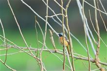 今年最後の、鳥撮り納め?