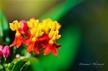 続 初冬の花