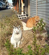 2015年、猫活・Blog納め(2015.12.31)