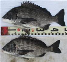 今年の初釣りは1月3日
