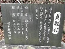 巨樹。。。貞観杉。慈眼寺のすぎ。押井のけやき。。。豊田市。。。