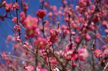 桜と梅とハスラーと…