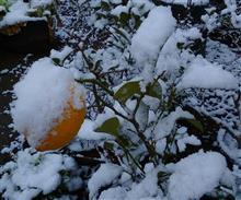この冬、初積雪(><)