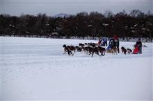 犬ぞりレースを見てきました!