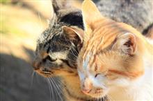 可愛い系の猫
