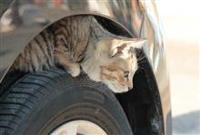 乗車前に猫バンバンを!