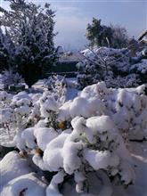 大雪だけど・・・・撮りました(^^)V