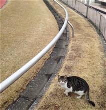 走る?   猫(2016.1.31)