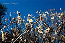 真冬の公園にて 〜冬の武蔵野@Leica Q〜