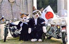 昭和のヤンキー車。