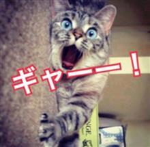 エッ!!(๑°ㅁ°๑)マジかっ??