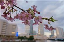 5年目の車検&横浜の河津桜