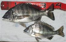 紀州釣りを初めて 2月に初釣果